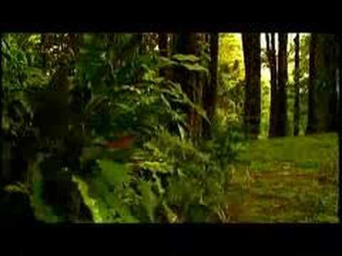 Jennifer Salinas – Video: Te Creere