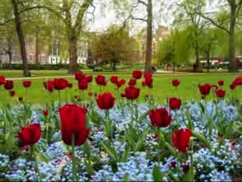 Video: Jardin De Rosas – Annette Moreno